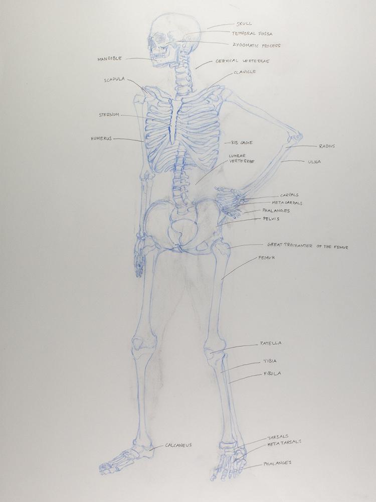 Overlay Front Bones